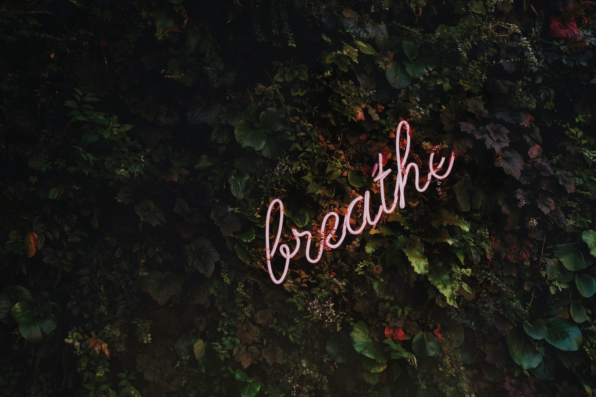 "neon light with the word ""breathe"""