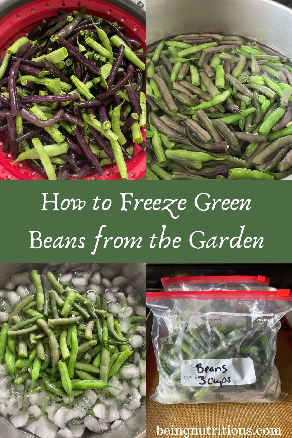 4 images: first is fresh beans, second is beans in boiling water, 3rd is blanched beans in ice bath, and 4th is frozen beans in zipper bags. Text overlay in green rectangle: How to Freeze Green Beans from the Garden.
